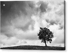 Tree On Hill - Doughton Park Blue Ridge Parkway Acrylic Print