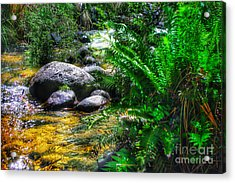 Mountain Stream Acrylic Print by Blair Stuart