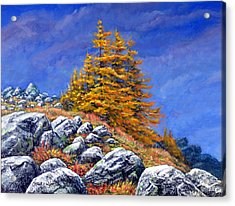 Mountain Tamaracks Acrylic Print by Frank Wilson