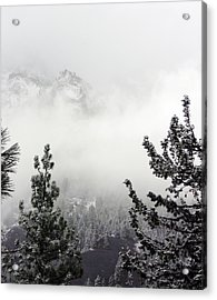 Mountain Top Pine Iv Acrylic Print by D Kadah Tanaka
