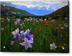 Acrylic Print featuring the photograph Mountain Wildflowers by Karen Shackles