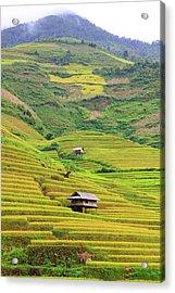 Mountainous Rice Field Acrylic Print by Akari Photography
