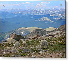 Mountains And Goats Acrylic Print