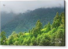 Mountains Vegetation Acrylic Print by Svetlana Sewell