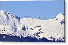 Mountaintop Geese Acrylic Print