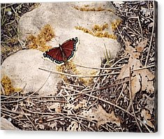 Mourning Cloak Acrylic Print by Conrad Mieschke
