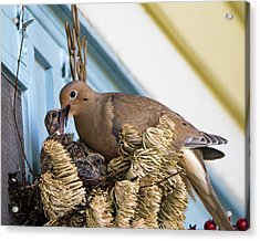 Mourning Dove And Chicks 3 Acrylic Print by Steven Ralser