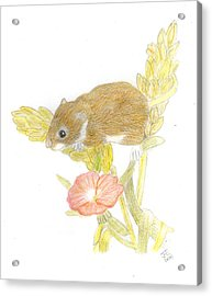 Mouse On The Corn Acrylic Print by Jacqueline Essex