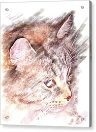 Mouser Acrylic Print by Barbara MacPhail