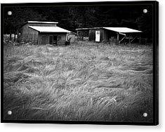 Moving Grass Acrylic Print by Dale Stillman