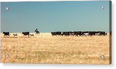 Moving The Herd Acrylic Print by Todd Klassy