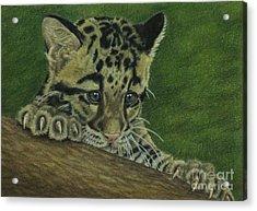 Mowgli Acrylic Print by Jennifer Watson