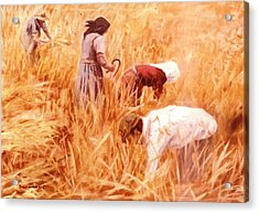 Mowing Harvest Acrylic Print by George Siaba