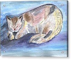 Mprints - Rainbow Cat Acrylic Print