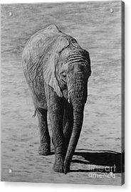 Mpumi Acrylic Print by Jennifer Watson