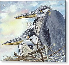 Mr And Mrs Bird Acrylic Print by Don Bosley