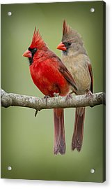 Mr. And Mrs. Northern Cardinal Acrylic Print