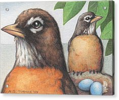 Mr And Mrs Robin Are Expecting Acrylic Print by Amy S Turner