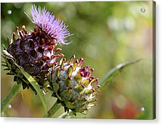 Mr And Mrs Thistle  Acrylic Print by Jeremy Lavender Photography