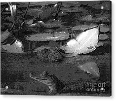 Mr. Caiman Acrylic Print