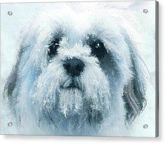 Mr. Cool - Impressionist Shih Tzu Dog Portrait Acrylic Print by Rayanda Arts