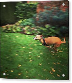 Mr Finly Enjoying A Few Rapid Laps Of Acrylic Print