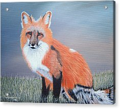 Mr. Fox Acrylic Print