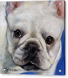 Mr. French Acrylic Print