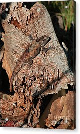 Mr. Lizard - Tucson Arizona Acrylic Print by Donna Greene