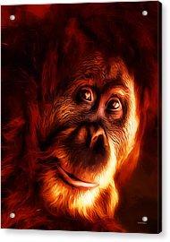 Mr Orangutan Portrait  Acrylic Print