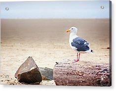 Mr. Seagull Acrylic Print