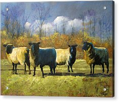 Mr. Shew's Sheep Acrylic Print by John Reynolds