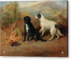 Mr Stott's Favourite Dogs Acrylic Print