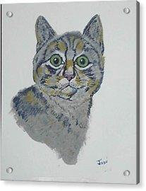 Mr. Tiger Acrylic Print by Hilda and Jose Garrancho