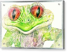 Mr Ribbit Acrylic Print