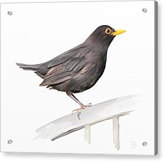 Acrylic Print featuring the painting Ms. Blackbird Is Brown by Ivana Westin
