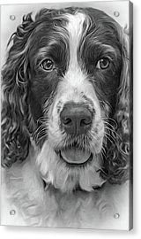 Ms Kaya 3 - Paint Bw Acrylic Print by Steve Harrington