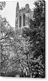 Msu Beaumont Tower Black And White 3 Acrylic Print