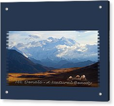 Mt. Denali National Park Acrylic Print