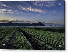 Dawn And Fog Over The Farmland Acrylic Print