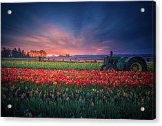 Mt. Hood And Tulip Field At Dawn Acrylic Print