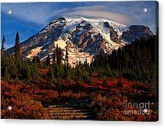 Mt. Rainier Paradise Morning Acrylic Print