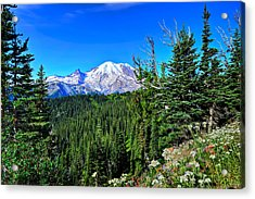Mt. Rainier Wildflowers Acrylic Print