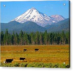 Mt. Shasta Morning Acrylic Print