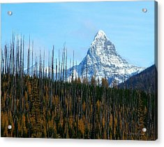 Mt St Nicolas After The Fire Acrylic Print