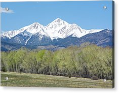 Mt. Yale - Spring Acrylic Print by Aaron Spong
