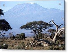 Mt.kilimanjaro Acrylic Print by Wade Worsley