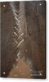 Acrylic Print featuring the photograph Mud Escape by Stephen Mitchell
