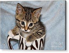 Mug Kitten Acrylic Print