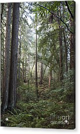 Acrylic Print featuring the photograph Muir Woods Tranquility by Sandra Bronstein